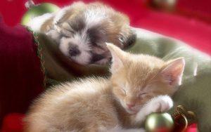 Puppy & Kitten